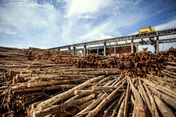 Mais de R$ 4 bilhões estão sendo investidos na construção da LD Celulose