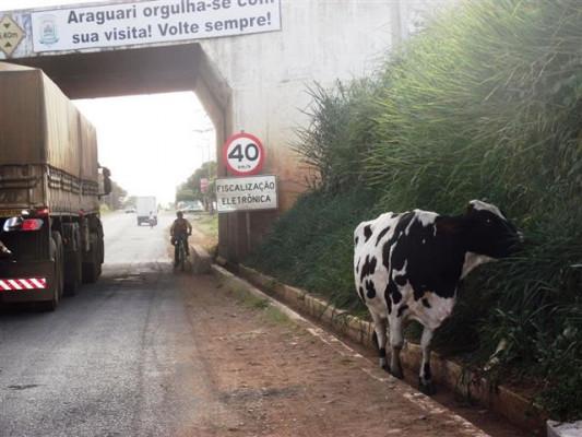 Moradores relatam transtornos causados pela falta de limpeza pública, buracos nas vias de acesso à Araguari e animais soltos