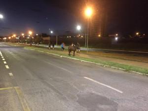 """Foi presenciado um cavalo """"passeando"""" na famosa """"Passarela da Banha"""""""